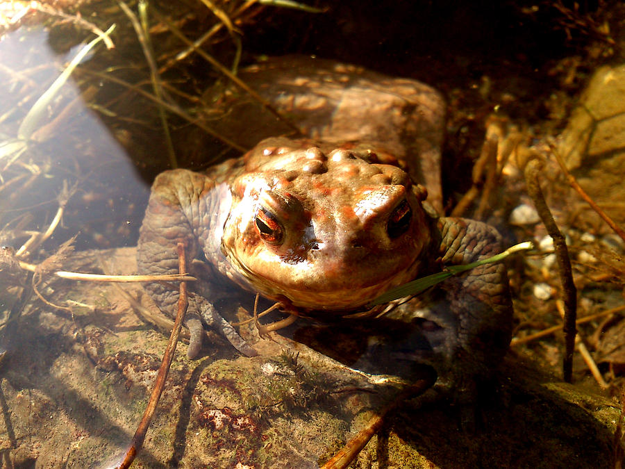 Toad Photograph - Smile by Lucy D