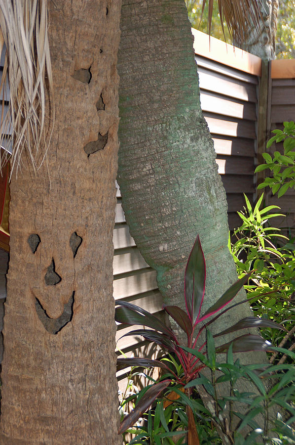 Smiley Tree Photograph