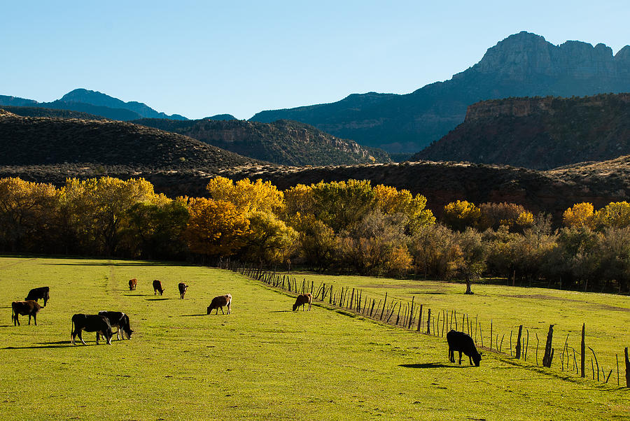 Smithsonian Butte And Two Feathers Ranch Early Fall On The Virgin River Rockville Utah Photograph