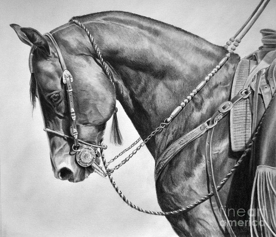 Quarter Horse Drawings...