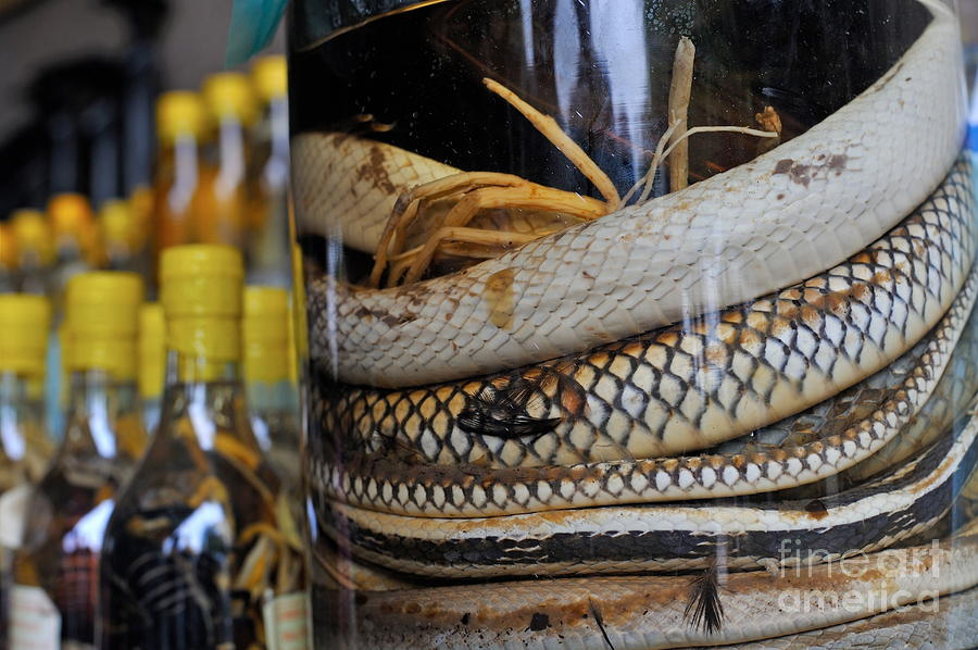 Snakes In Snake-flavoured Alcohol Bottles Photograph