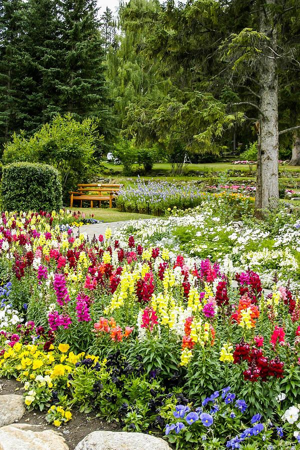 Snapdragon Garden Photograph By Margaret Buchanan