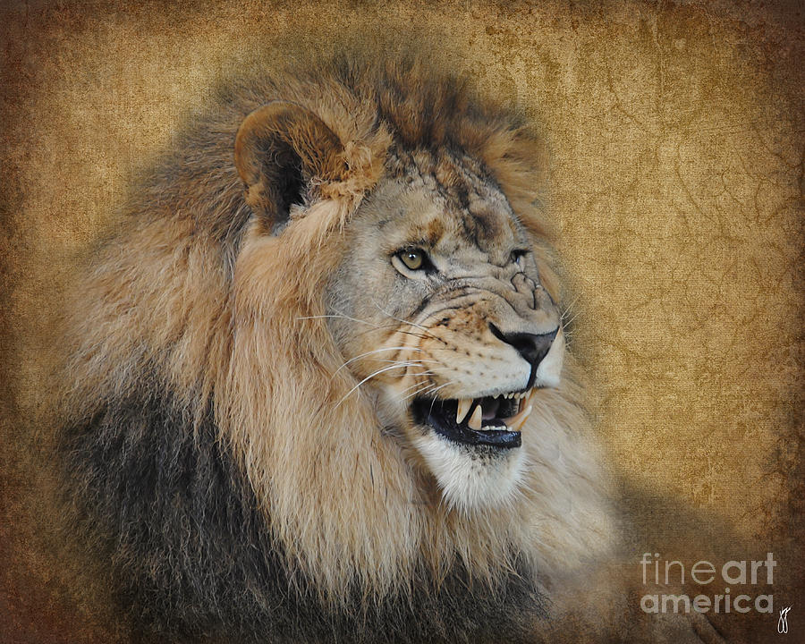 Keyword Images Lion Snarl Drawing