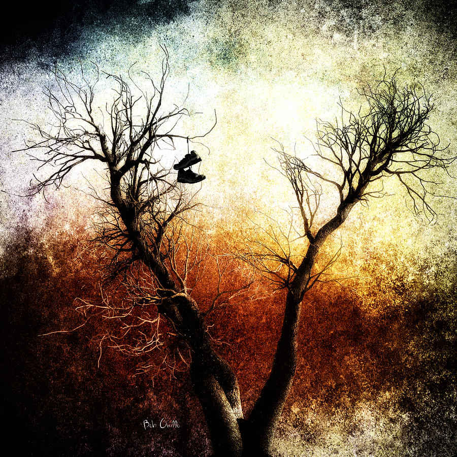 Sneakers In The Tree Photograph  - Sneakers In The Tree Fine Art Print