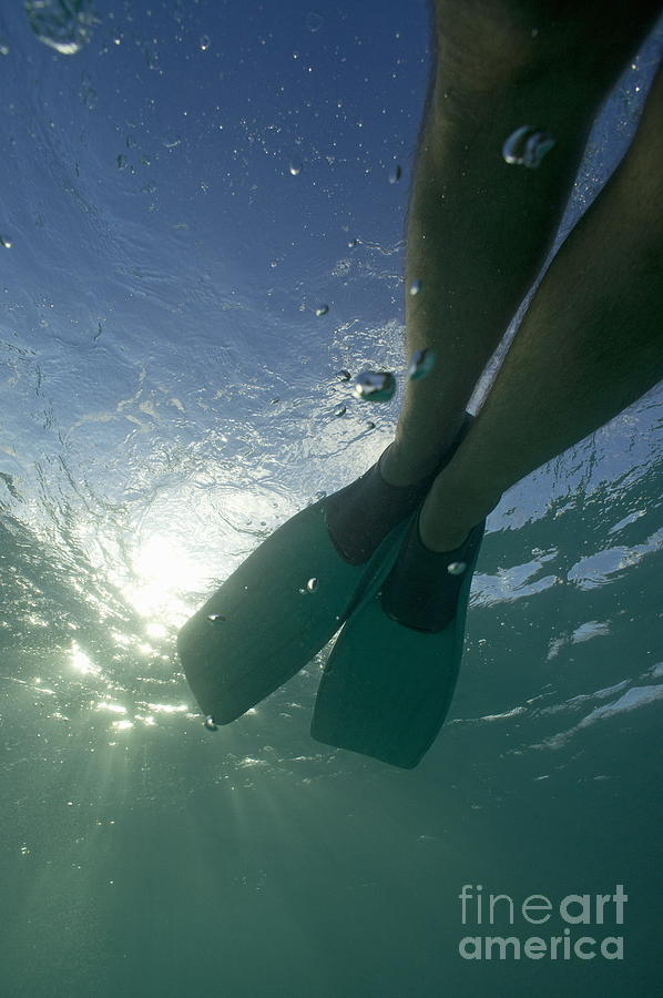 Snorkeller Legs With Flippers Underwater Photograph  - Snorkeller Legs With Flippers Underwater Fine Art Print