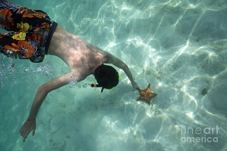 Snorkeller Touching Starfish On Seabed Photograph