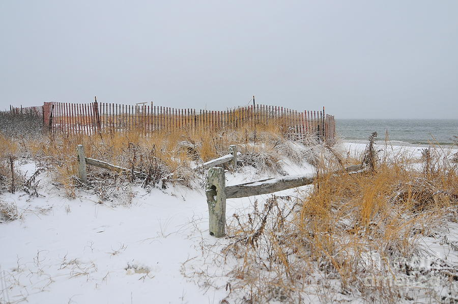 Cape Cod Massachusetts Photograph - Snow And Sand by Catherine Reusch  Daley