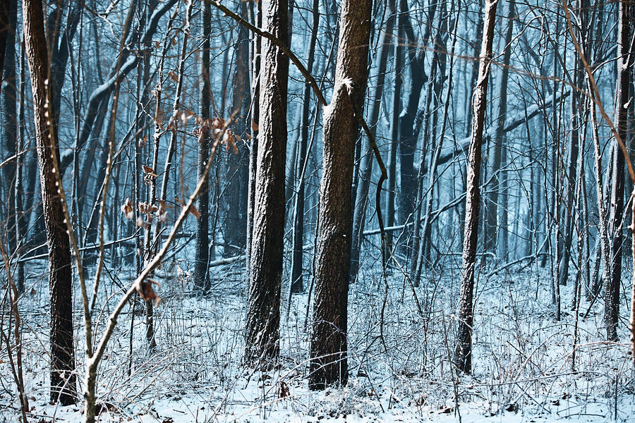 Snow At Dusk Photograph  - Snow At Dusk Fine Art Print