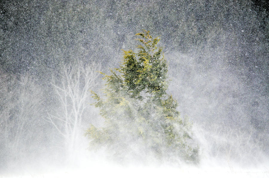 Snow Blown Photograph  - Snow Blown Fine Art Print