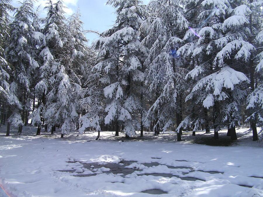 Snow Pyrography By Boultifat Abdelhak Badou