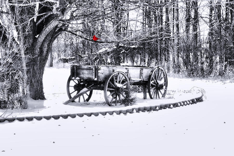 Snow Bound Photograph  - Snow Bound Fine Art Print