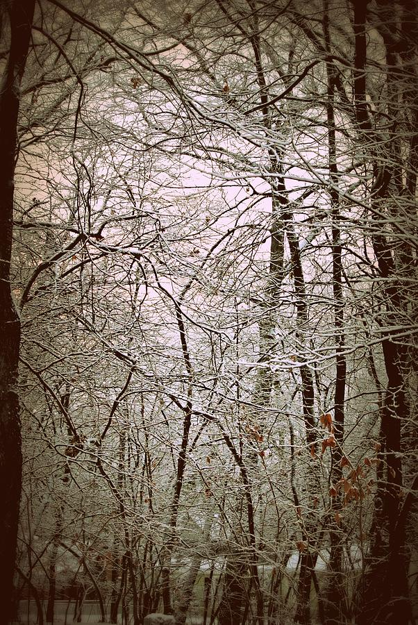 Snow Cover Forest Photograph