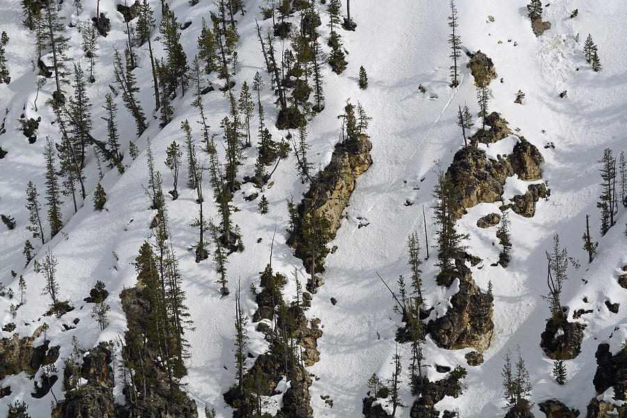 Snow-covered Canyon Walls In Yellowstone National Park Photograph