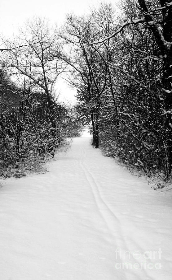 Snow Covered Forest Trail Photograph  - Snow Covered Forest Trail Fine Art Print