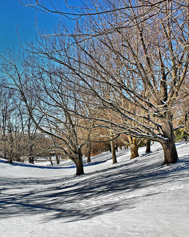 Snow Covered Park Photograph  - Snow Covered Park Fine Art Print