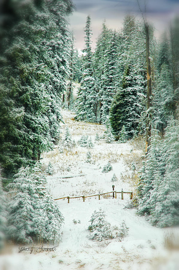 Snow Covered Path Photograph