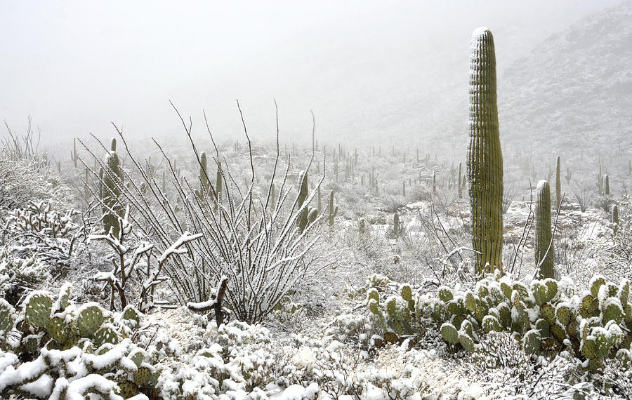Snow Day In The Desert  Photograph  - Snow Day In The Desert  Fine Art Print
