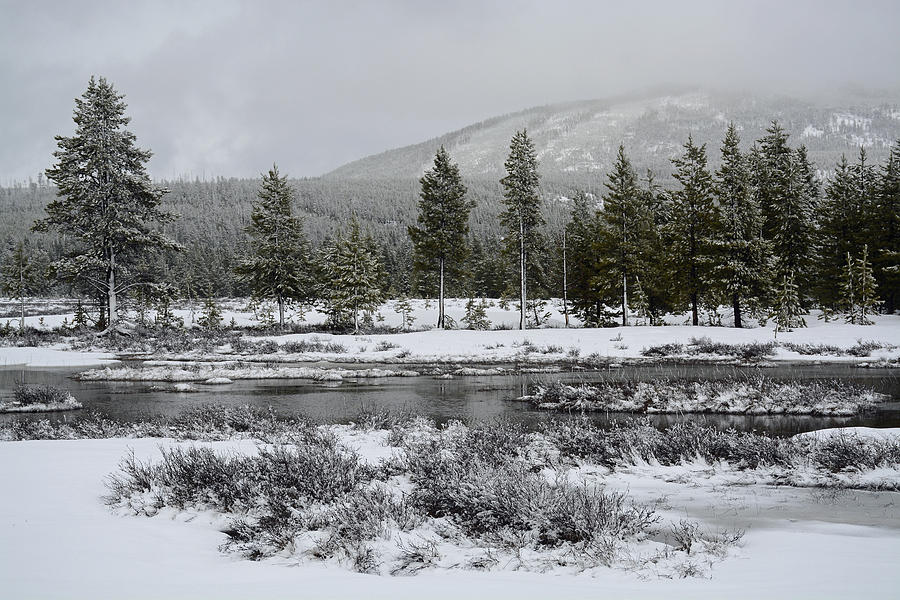 Yellowstone Photograph - Snow-dusted Gibbon Meadows In Yellowstone by Bruce Gourley