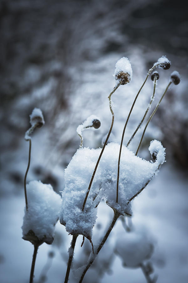 Snow Photograph - Snow Forms by Belinda Greb