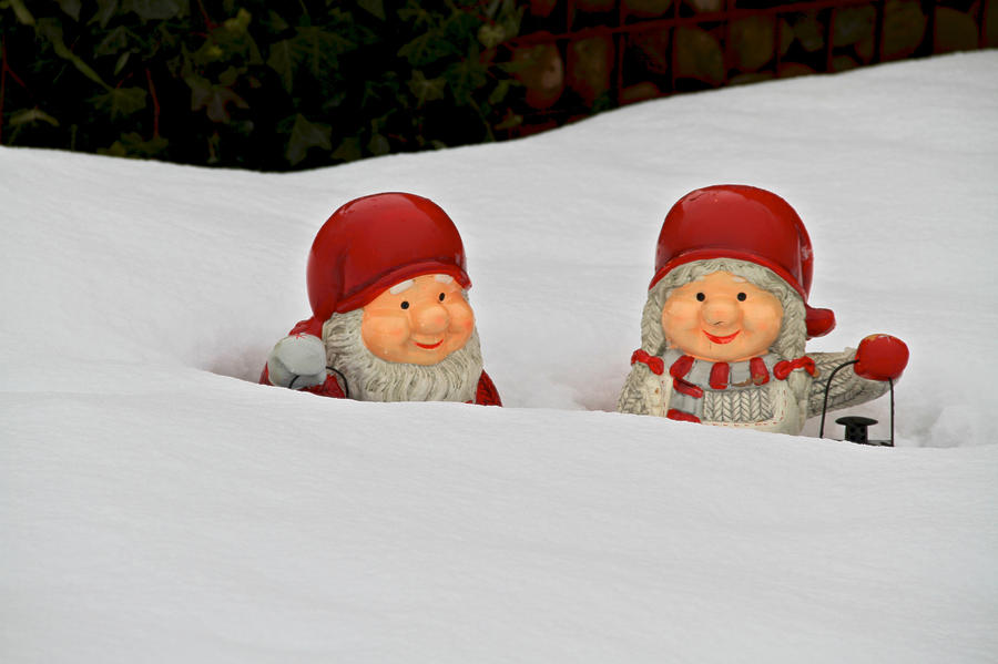 Snow Gnomes Photograph  - Snow Gnomes Fine Art Print