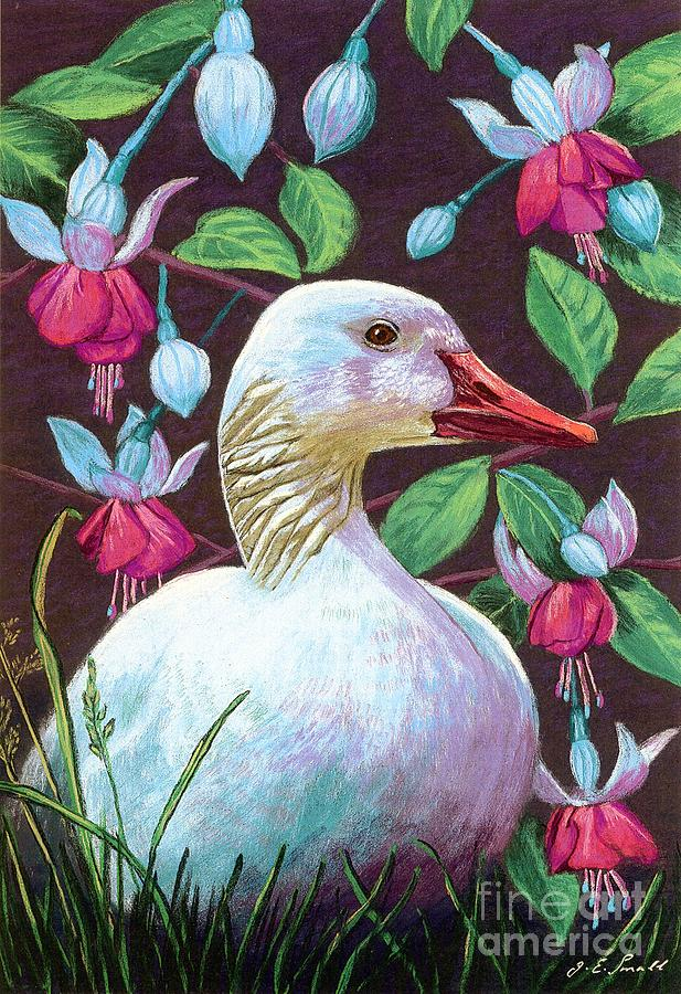 Snow Goose Painting  - Snow Goose Fine Art Print