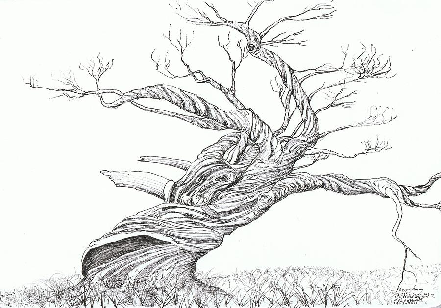 Twisted Tree Drawing Sketch Coloring Page