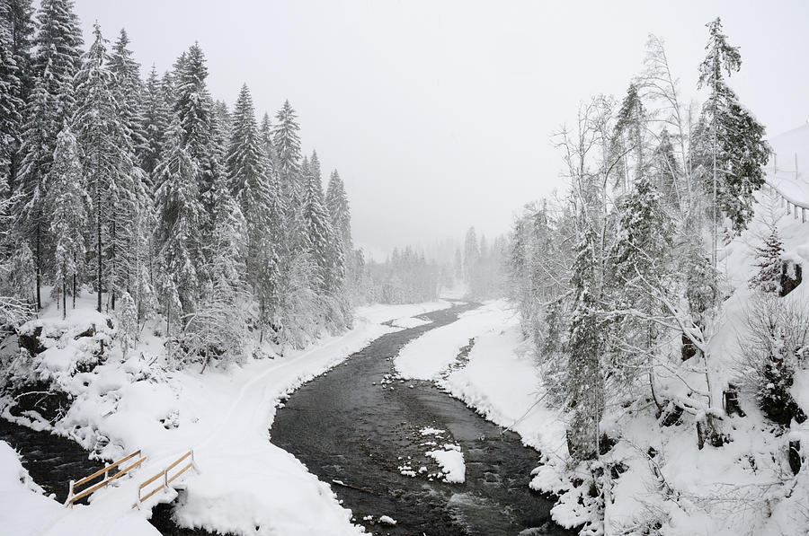Snow Landscape - Trees And River In Winter Photograph