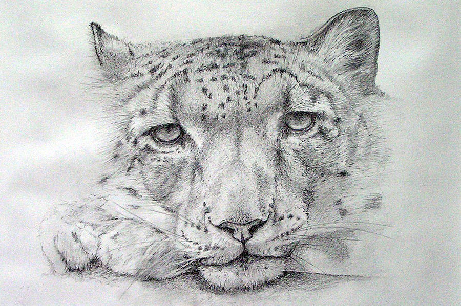 Snow leopard drawing - photo#11