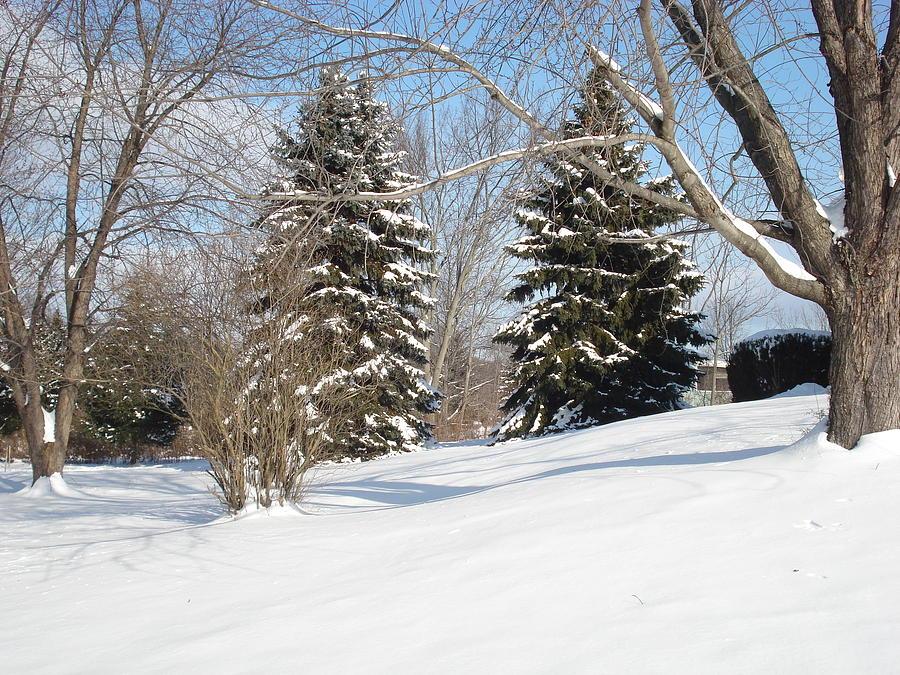 Snow Photograph