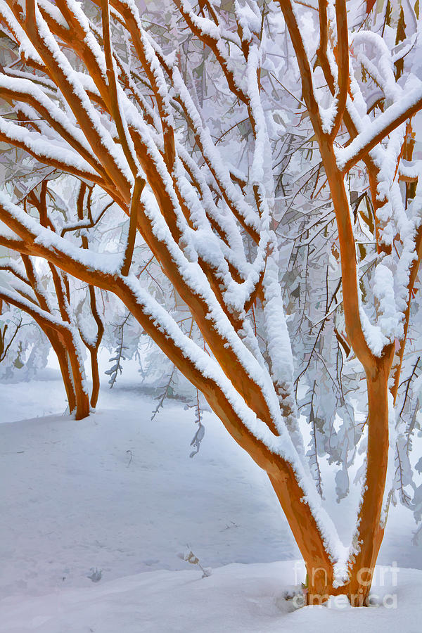 Greensboro Painting - Snow Wonderful Snow - Greensboro North Carolina by Dan Carmichael
