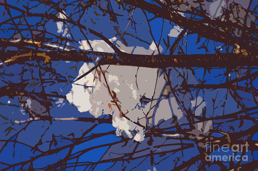 Snowball Digital Art  - Snowball Fine Art Print