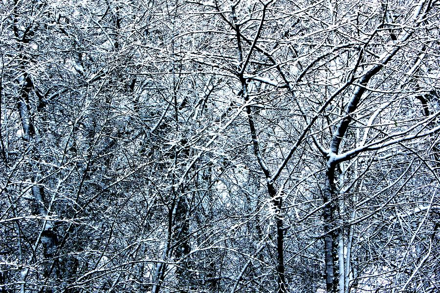 Snowed Trees 2 Digital Art