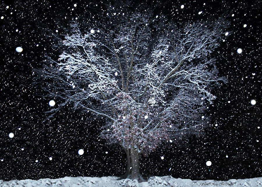 Snowfall At Night Photograph