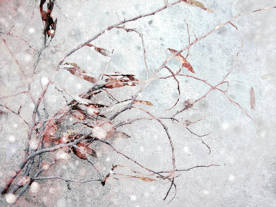 Snowfall On Branch Photograph  - Snowfall On Branch Fine Art Print