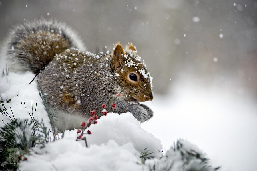 Snowflakes And Squirrel Photograph