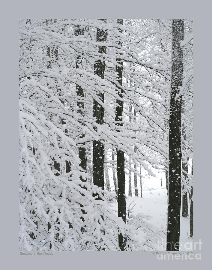 Snowing In The Woods Photograph  - Snowing In The Woods Fine Art Print