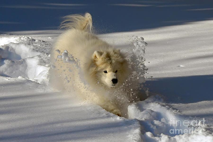Snowplow Photograph