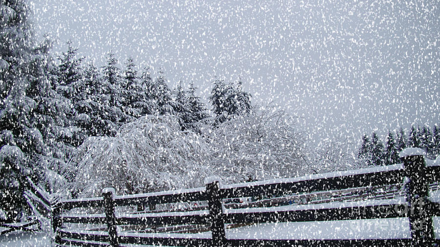 Snow Prints Photograph - Snowstorm Coming by Beverly Guilliams