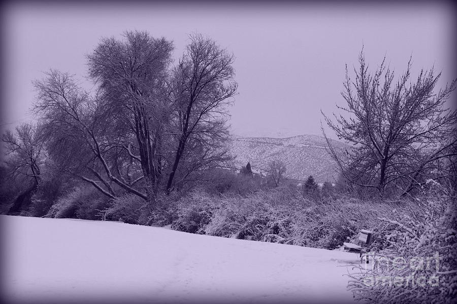 Snowy Bench In Purple Photograph