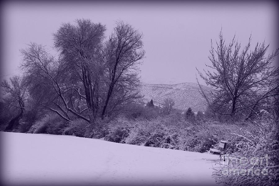 Winter Photograph - Snowy Bench In Purple by Carol Groenen
