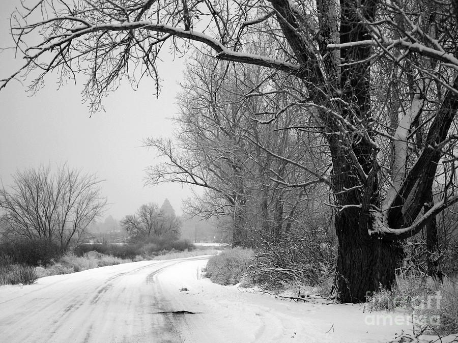Snowy Branch Over Country Road - Black And White Photograph  - Snowy Branch Over Country Road - Black And White Fine Art Print