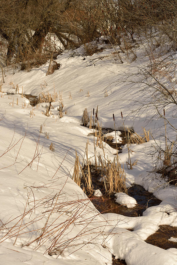 Snowy Brook Photograph  - Snowy Brook Fine Art Print