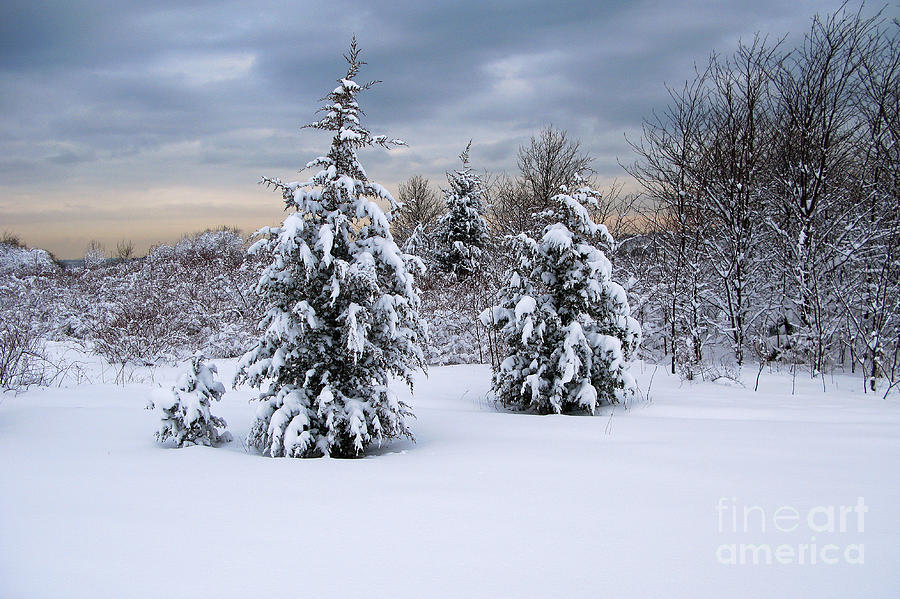 Snowy Dawn Photograph  - Snowy Dawn Fine Art Print