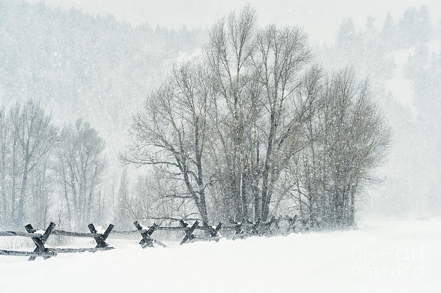 Snowy Day In The Tetons Photograph