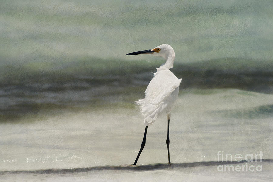 Egret With Textures Photograph - Snowy Egret by John Edwards