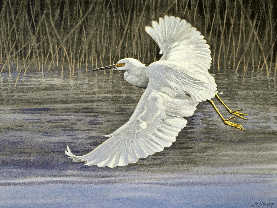 Wildlife Painting - Snowy Egret by Paul Krapf