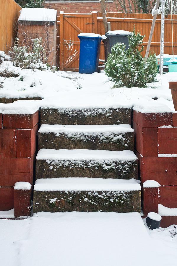 Snowy Garden Photograph