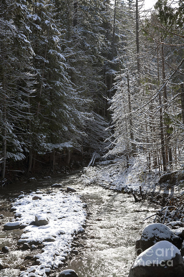 Snowy Oregon Stream Photograph