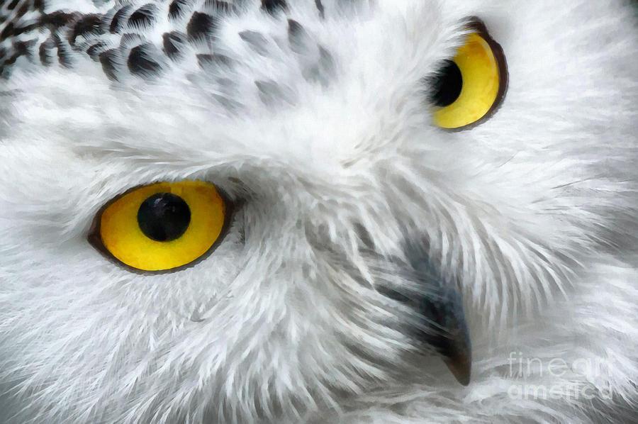 Owl Eyes Paintings Snowy Owl Eyes Painting