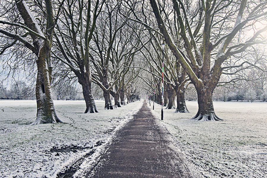 Snowy Path Through Jesus Green In Cambridge Uk Photograph